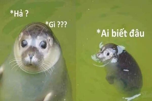 Meme chú hải cẩu