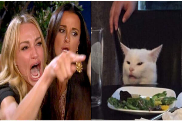 Meme chú mèo Smudge